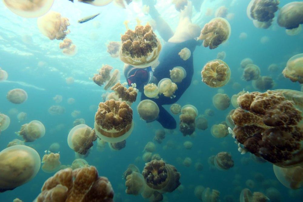 jellyfishlake09