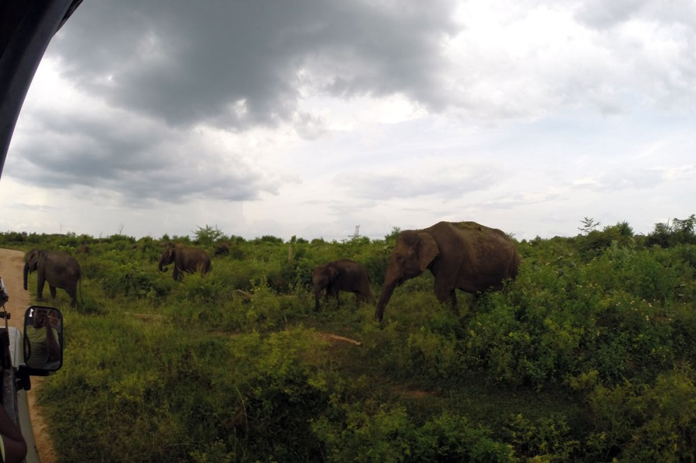 Udawalawe National Park has many wild elephants. Picture Heini Härsilä