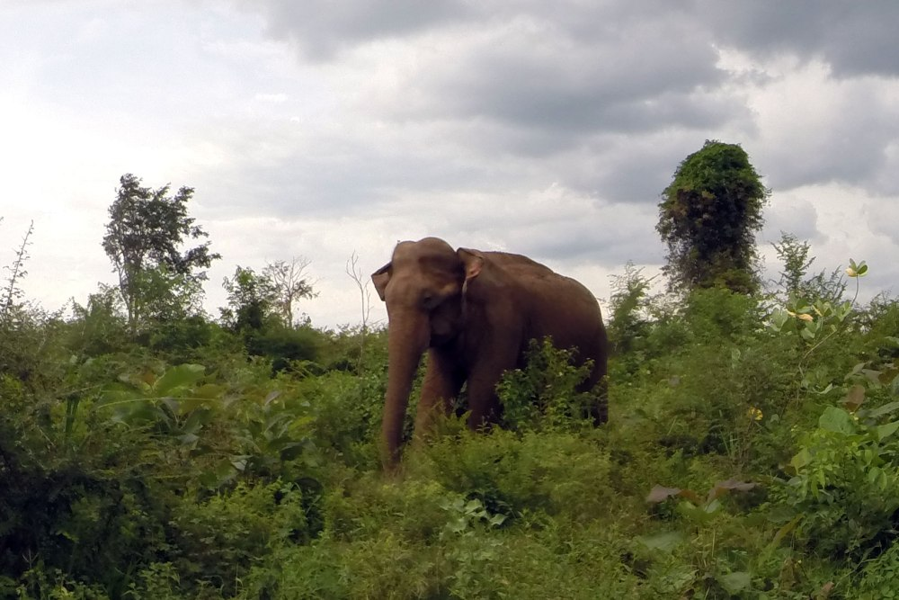 Elephant in Udawalawe National Park, Sri Lanka.