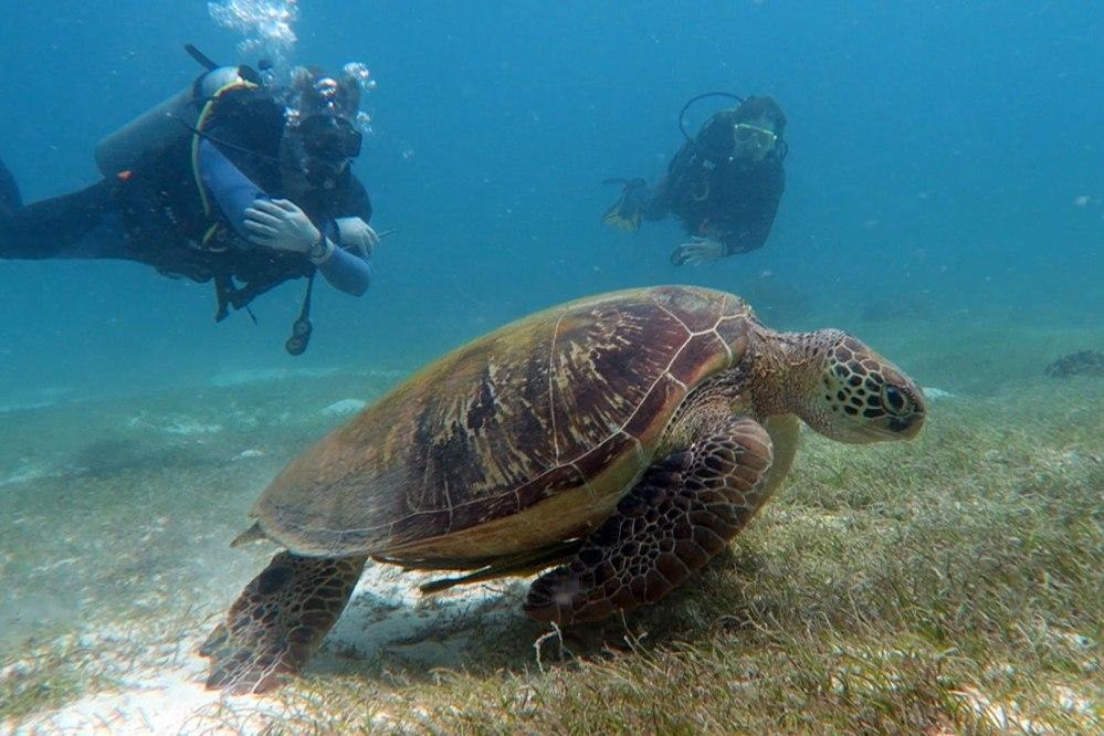 Balicasag turtles scuba diving