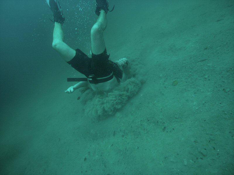 Loose your head in barracuda lake