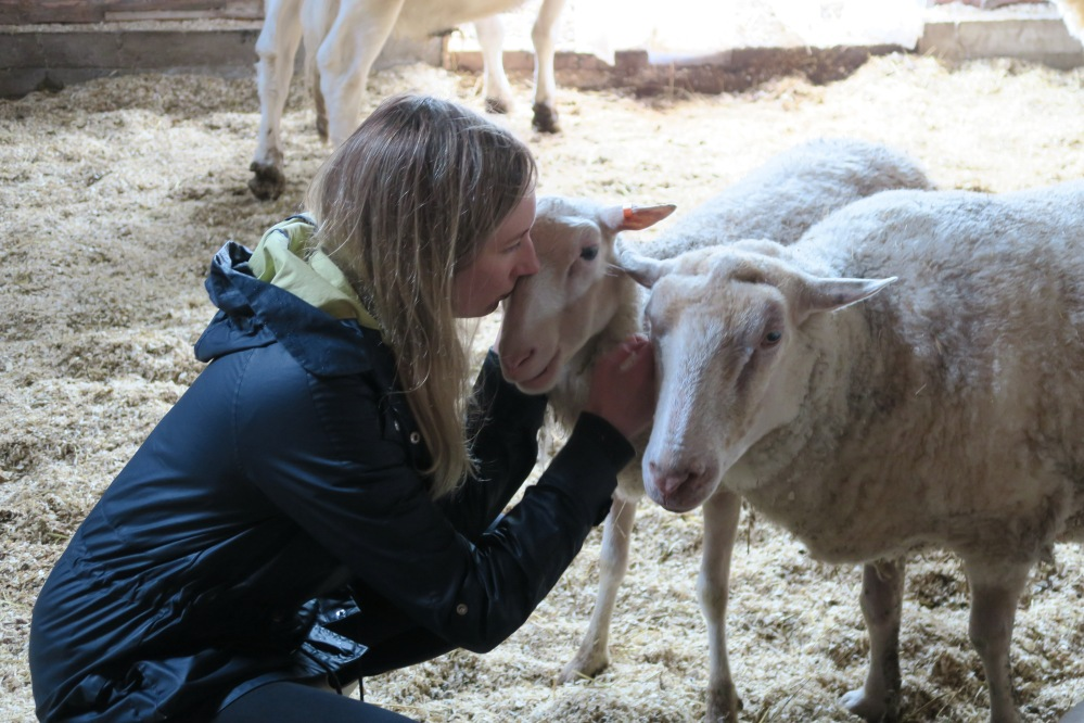 Sheep also wanna be kissed and cuddled every now and then.